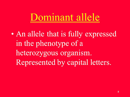 up of an organism what genes letter represented by capital letters 8 dominant allele an allele that is fully expressed in the phenotype