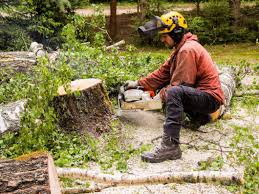 Image result for Tree Removal Service images