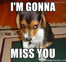 I'm gonna miss you - Sad dog in heat | Meme Generator via Relatably.com