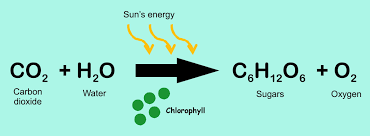 photosynthesis is a classic example of a chemical reaction in which bonding pairs change in chlrophyll by the energy of the sun co2 and h2o change and