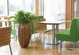 office plant displays. Beautiful Office Rent Or Buy Stunning Office Plant Displays All Budgets   Plants U0026 Flowers In I