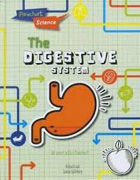 The Digestive System Flowchart Science The Human Body By