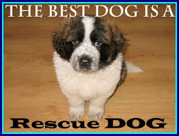 Rescue Dog Quotes Stunning Stunning Inspirational Rescue Dog Quotes U Every Deserves Pics Of