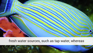 Aquarium Plants Co2 Regulator Experts UK - video dailymotion