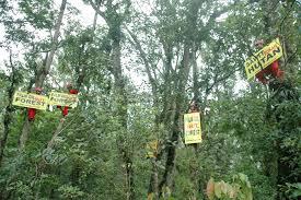 Image result for gambar hutan konservasi
