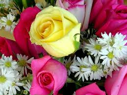 briliant beautiful roses wallpapers for desktop 37 adorable