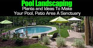 pool landscape plants and ideas to
