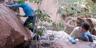 Resultado de imagen para petroglifos de La Pintada en Sonora