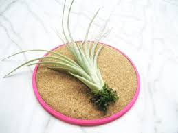 Air Plant Display Diy What A Corker Air Plant Display Idea No2 Adorablest