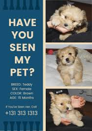 how to make lost dog flyers free missing poster flyer designs designcap poster flyer maker