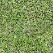 dirt grass texture seamless. Grass Texture [seamless] By O-O-O-o-0-o-O-O-O Dirt Seamless S