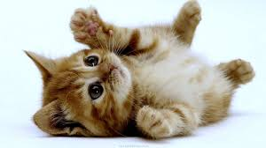 five ways to make your home kitten friendly