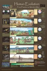 Amazon Com 24x36 Laminated Human Evolution Educational