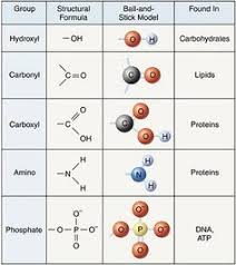 Functional Groups Chart Biology 101 Chapter 4 Carbon Organic Chemistry