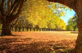 natural framing photography. Natural Framing Photography H