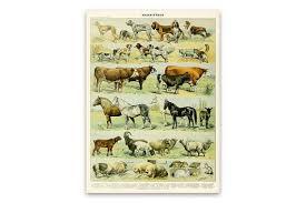 Farm Animal Poster Art Mammals Chart Print Educational Diagram Adolphe Millot Vintage Style Scientific Illustration Am37