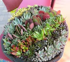 fairy garden container ideas. Garden Design With Succulent Container Ideas Home Inspirations How To Make A Fairy