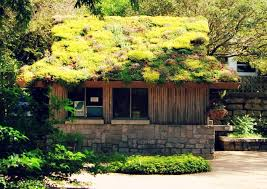 Image result for sempervivum green roof