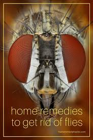 home reme s to rid of flies