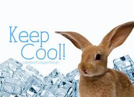 Keep Cool!   Napoleon Bunnyparte