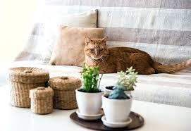 indoor plants for cats cat on sofa next to house plants on coffee table house plants