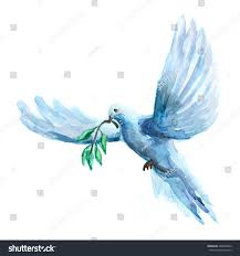 watercolor raster ilration of peace dove holding olive branch ilration for print web