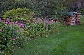 low maintenance landscaping with