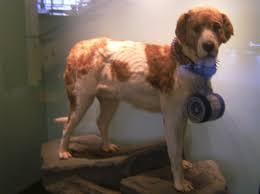 Lijst Van Bekende Honden Wikipedia