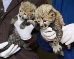 Fresh Essays   argumentative essay should animals be kept in zoos SlideShare Wild Animal Watch Contest