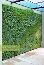 a living herb wall planted with easy to grow herbs holiday inn green room at