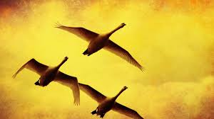 birds flying paintings swans yellow background wallpaper