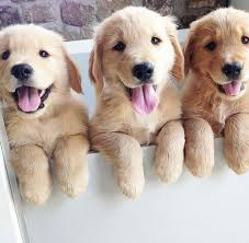 is there anything more relaxing than looking at pictures and videos of cute puppies well maybe pictures and videos of other cute s