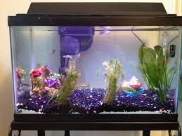 Fun Fish Tank Decorations Fish Tank At Home Mama