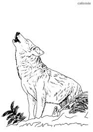 Native americans saw wolves as a symbol of loyalty and perseverance, intelligence and instinct. Wolves Coloring Pages Free Printable Wolf Coloring Sheets
