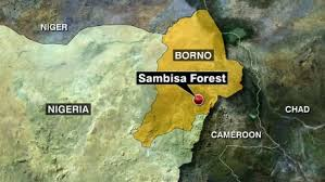 Image result for 200 girls rescued in nigeria
