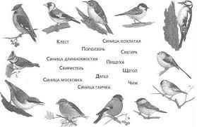 Викторина посвящённая Дню птиц