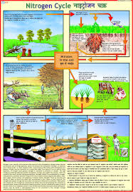 Buy Nitrogen Cycle Chart Book Online At Low Prices In India