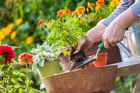 spring gardening tips by crg admin march 16 2018