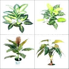 best houseplants for low light plants indoor trees good bonsai uk