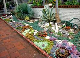 Appealing Succulent Rock Garden Photos Photos - Best idea home .