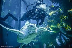 aquarium office. Employee Diving In The Giant Ocean Tank- Caring For Myrtle! - New England  Aquarium Aquarium Office