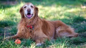 euthanizing your pet