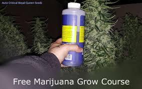 Maxi Grow Feeding Chart Feeding Chart To Grow Hte Best Marijuana