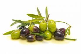 Olive Oak Size Chart Olive Oil Pomace Kosher Non Gmo