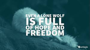 Even a lone wolf is full of hope and freedom. | QuotiePie