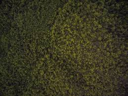 grass texture hd. Forest Grass Plant Texture Leaf Asphalt Pattern Green Soil Aerial Shrub Flooring Land Hd