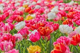 flower wall paper download garden flower wallpaper free stock photos download 13 302 free