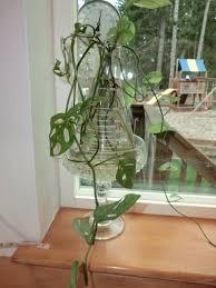 tip growing plants in water