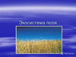 Презентация на тему Экосистема поля Поле это экосистема  1 Экосистема поля