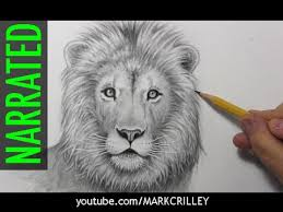 realistic lion face drawing. Delighful Drawing How To Draw A Lion Narrated Step By Step Intended Realistic Face Drawing